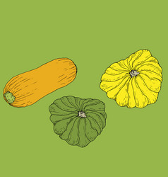 Set ripe juicy yellow zucchini and yellow and vector