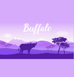 african buffalo cape buffalo syncerus caffer vector image