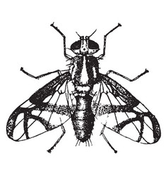 Apple worm fly vintage vector