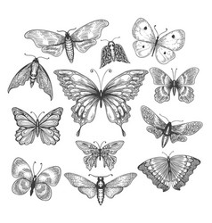 Butterfly mariposa sketch vector