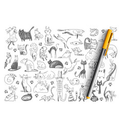 cats hand drawn doodle set vector image