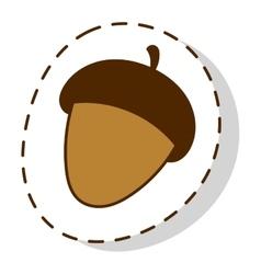 Dried acorns flat vector