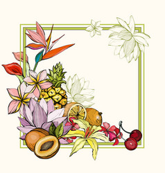 hand drawn exotic summer background with fruit vector image