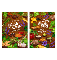spices green herbs vegetable and seasonings vector image