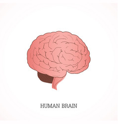 structure of human brain anatomy system vector image