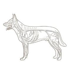 Vascular system dog vector