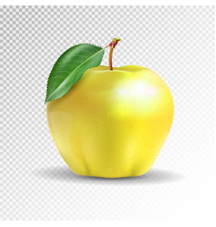 yellow apple isolated on transparent background vector image