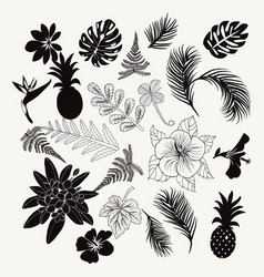 collection of tropical plants leaves and flowers vector image