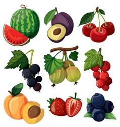 Set isolated berries vector