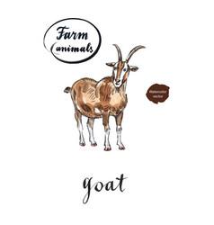 Brown goat vector