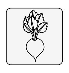 Fresh beet vegetable vector image