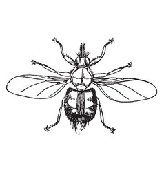 forest fly vintage vector image