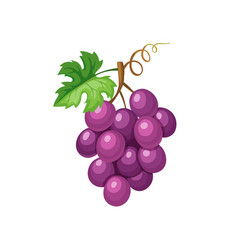 violet grape icon vector image