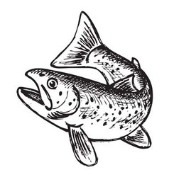trout vector image vector image