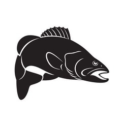 fish bass vector image