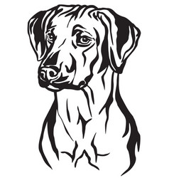Decorative portrait of rhodesian ridgeback dog vector