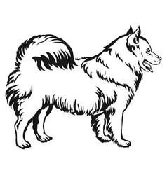Decorative standing portrait of dog samoyed vector