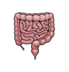 digestive system icon human intestines vector image