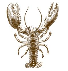 Engraving drawing of big lobster vector