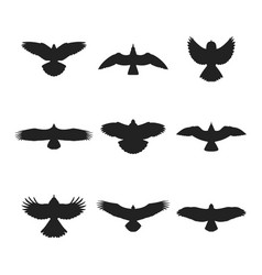 flying bird silhouettes set vector image