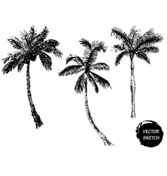 Palm tree sketch a vector