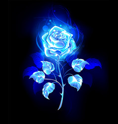 burning blue rose vector image