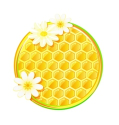 Honeycomb in circle with camomile flower vector