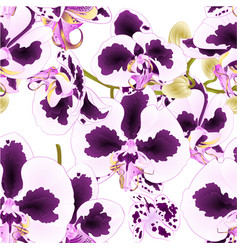 seamless texture orchid phalaenopsis with spots vector image