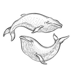Whale sketch vintage sea vector