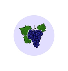 Icon Colorful Grapes vector image