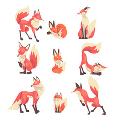 collection cute red foxes characters cartoon vector image