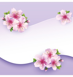 Floral background greeting card with flower sakura vector