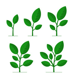 phases plant growing set on white background vector image