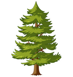 pine tree with green leaves vector image