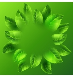 Spring with green leaves Card vector image