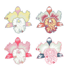 floral element orchid flower with countur isoleted vector image