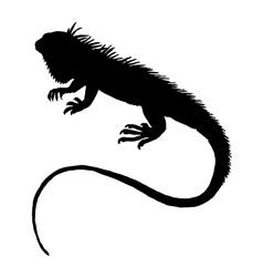 Iguana silhouette vector