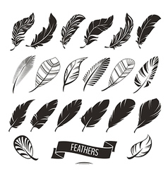 Set of different feathers vector image
