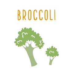 Broccoli isolated on white vector image