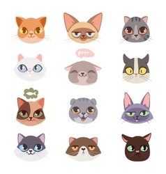 Cats heads vector image