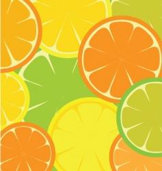 citrus fruit slices vector image