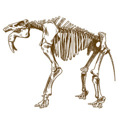 Engraving of deinotherium skeleton vector