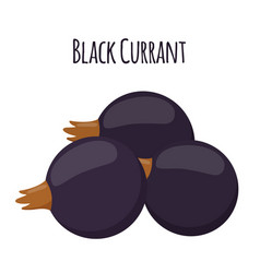 fresh berries black currant flat vegetarian food vector image