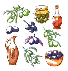 olives hand drawn isolated vector image