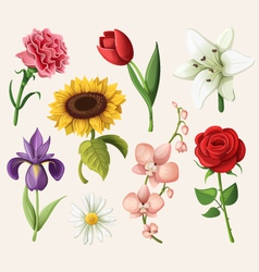 set romantic summer flowers vector image