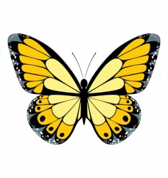 Yellow butterfly vector