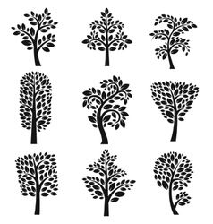 Stylized tree collection vector image