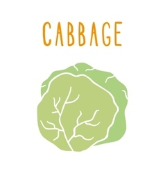 Green cabbage isolated on white vector image