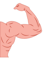 strong power muscle arms vector image