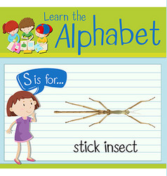Flashcard letter S is for stick insect vector
